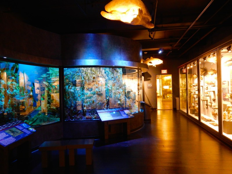 Marine Life Gallery exhibit, Harvard Museum of Natural History, Cambridge MA