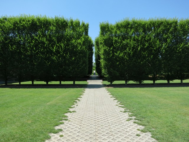 Symmetrical grove of trees outside contemporary art museum in Beacon, NY