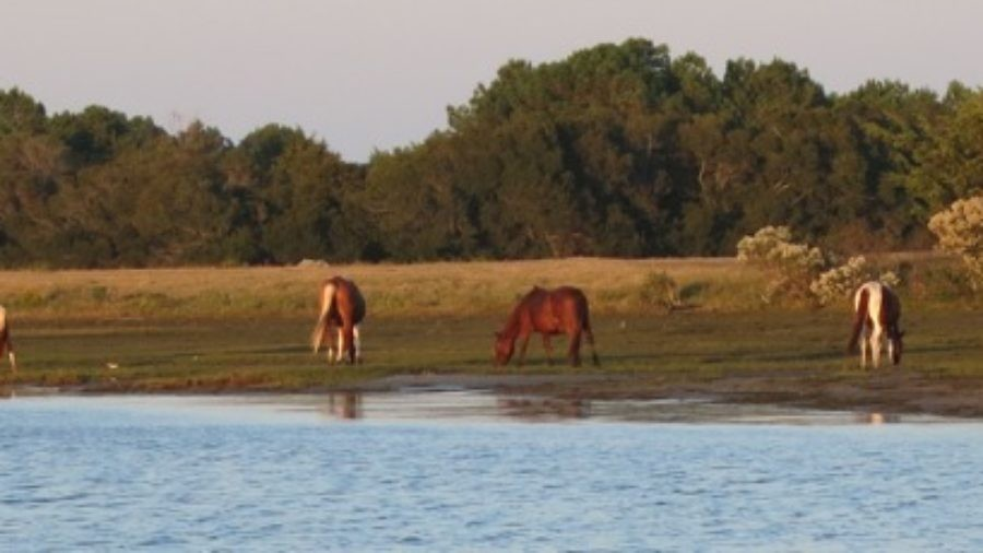 Chincoteague VA; Ponies, Rockets and The Friendliest People
