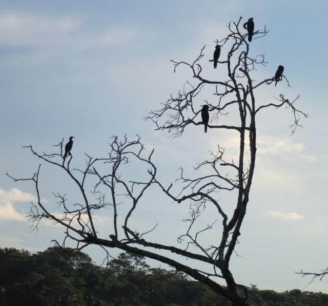 Birds-In-Lake-Tree-Sandoval-Lake