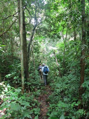 Lodge-Hike-Sandoval-Lodge-Amazon-Peru