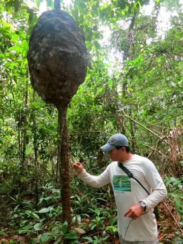 Termite-Tree-Sandoval-Lodge-Amazon-Peru