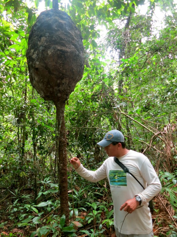 Termite-Tree-Sandoval-Lodge-Amazon-Peru