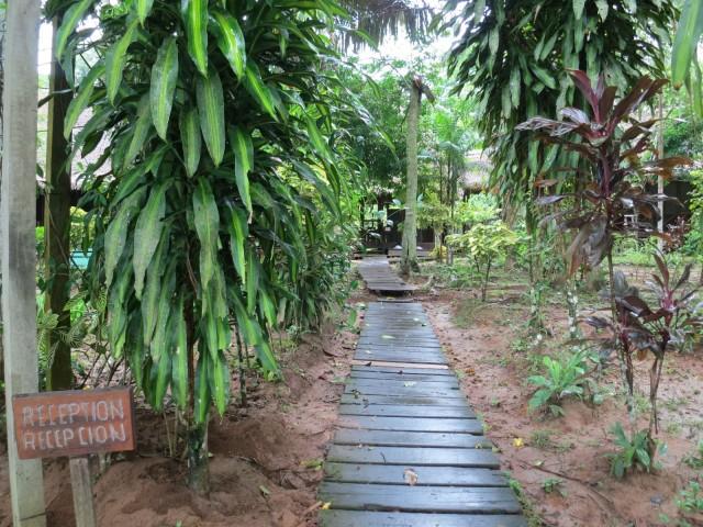 wet-rainforest-Sandoval-Lake-Lodge-Peru-Amazon