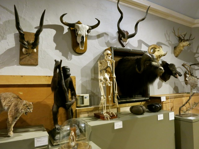 Objectify Exhibit, Berkshire Museum, Pittsfield MA