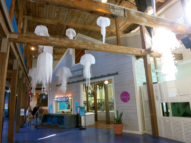 Jiggle A Jelly - Moon Jellyfish Touch Tank, Maritime Aquarium at Norwalk CT