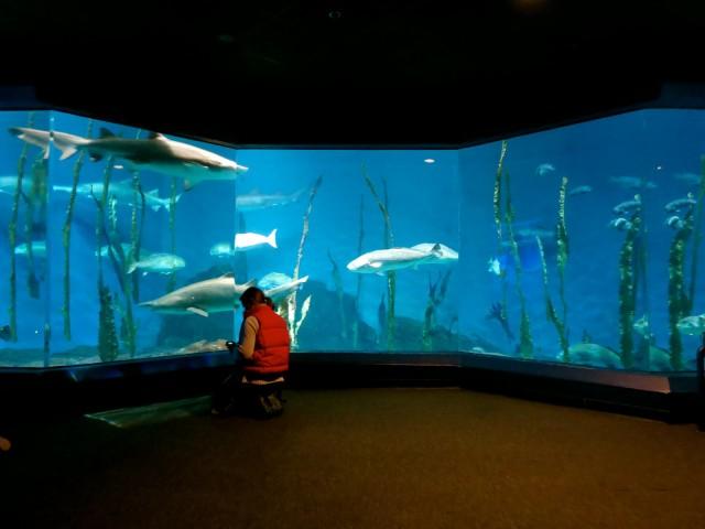 110,000 Gallon Shark and Sea Turtle Tank, Maritime Aquarium at Norwalk CT