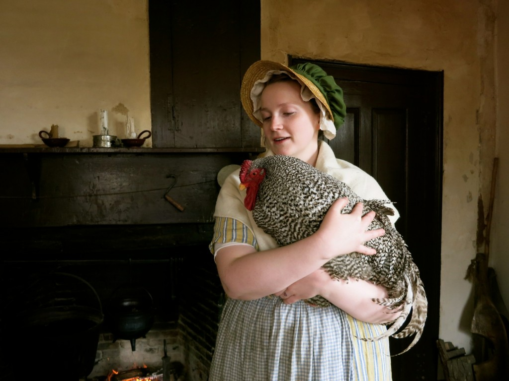 Mary Corrigan, docent, holding heritage-breed rooster at Coggeshall Farm Living History Museum, Bristol RI