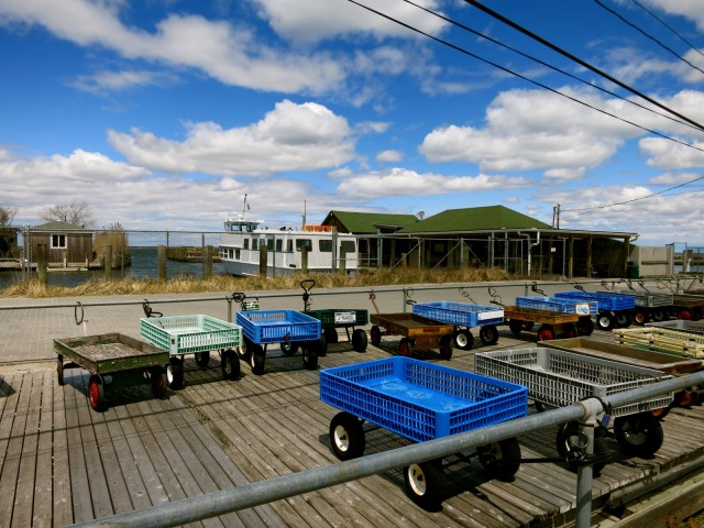 Wagons waiting at Fire Island ferry dock