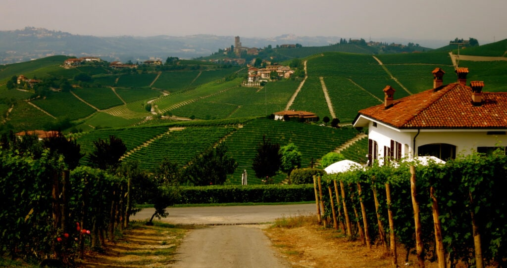 Family Vineyard Piedmont Region Italy