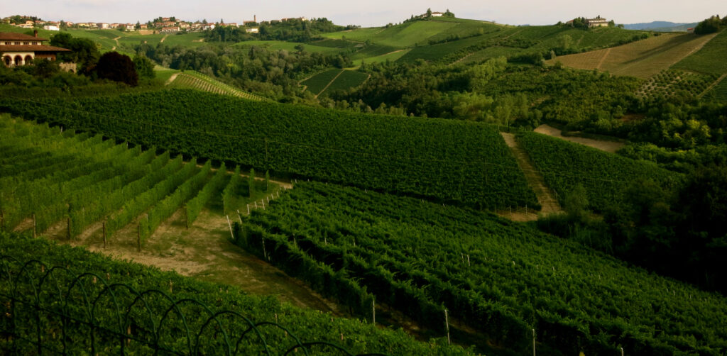 Montaribaldi Vineyards Piedmont Italy