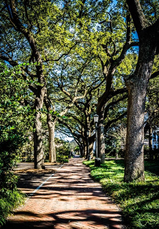 Oak Trees line brick walkway at Johnson Square in Savannah GA.