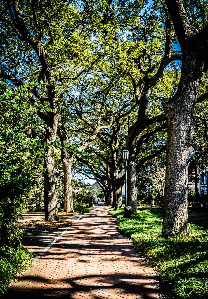 Oak Trees line brick walkway at Johnson Square in Savannah GA.