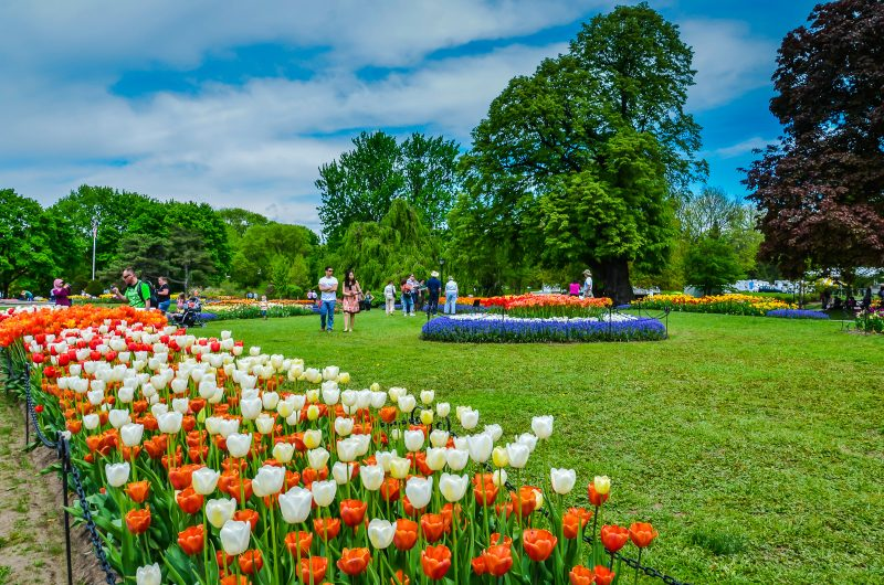 Tulip Fest #Albany #NY Annual Festival Is A Colorful Celebration Of Dutch  Heritage And
