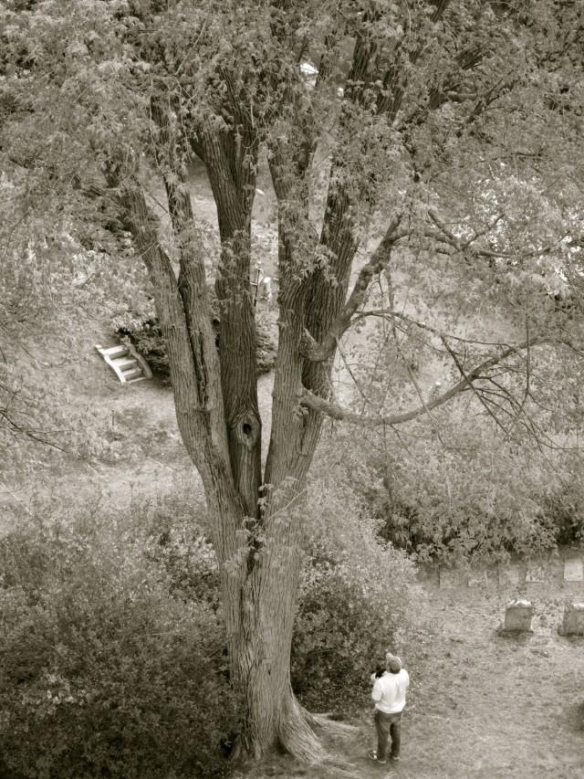 Birdwatching at Mount Auburn Cemetery