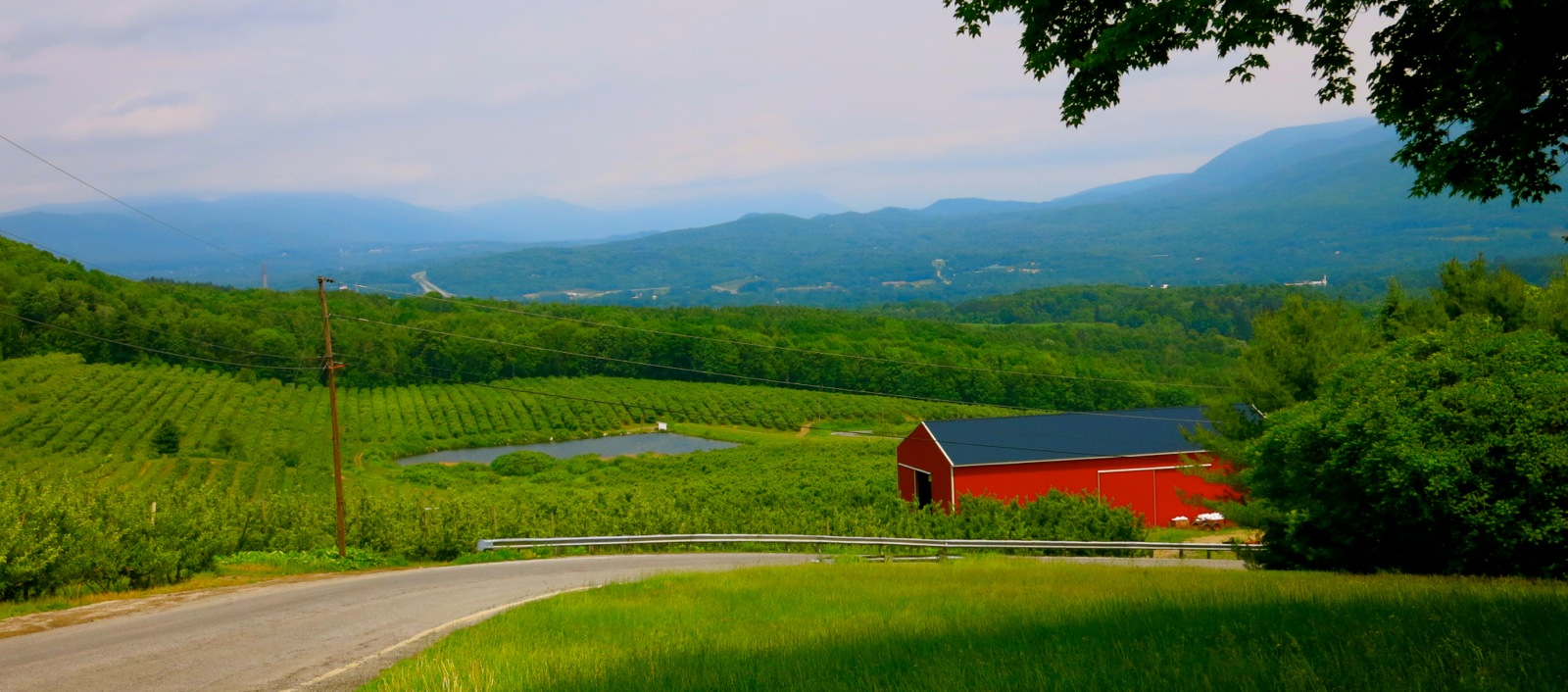 Apple Orchards and Vermont Mountains - Bennington VT