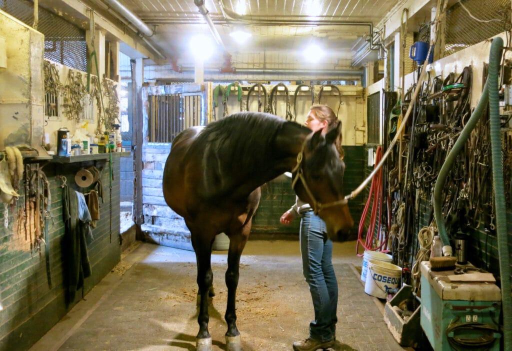 Tending to the horses Morgan Horse Farm VT