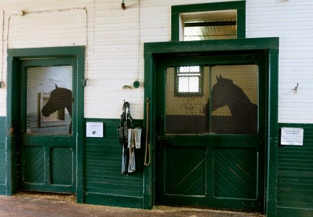 Morgan Horses in Stalls, Middlebury VT