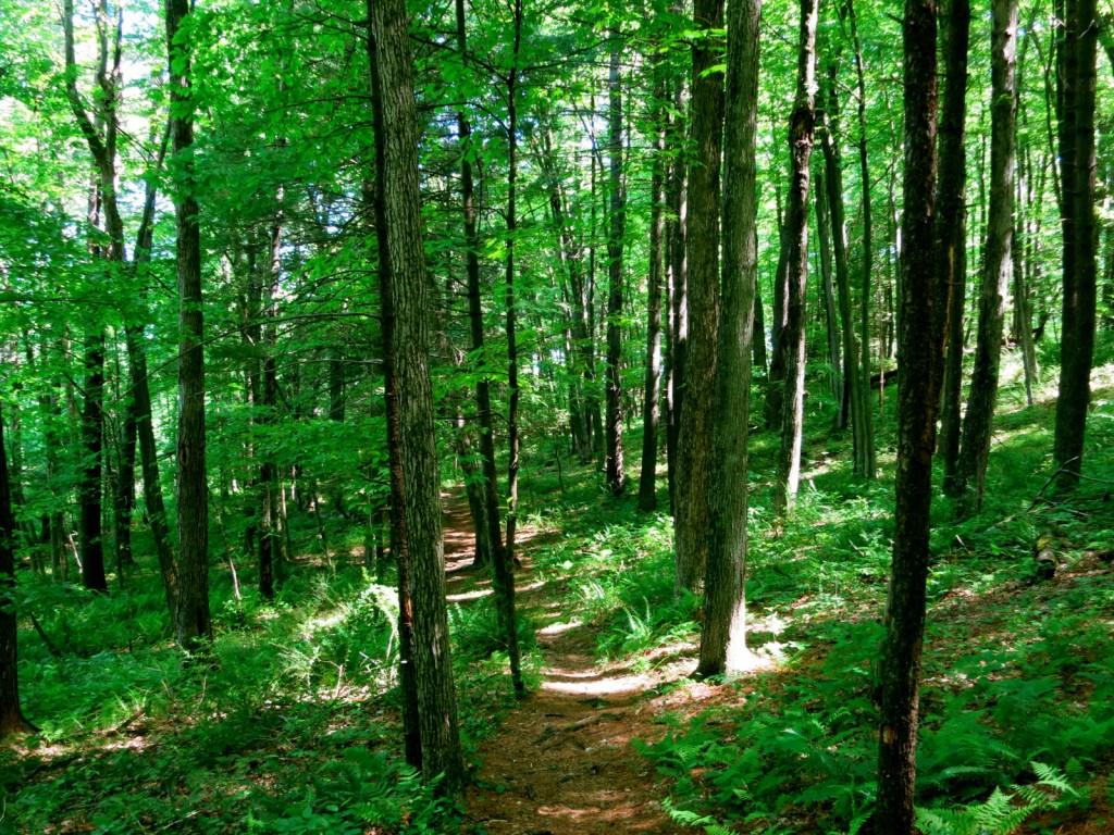 RamsHorn-Livingston Sanctuary, Catskill NY