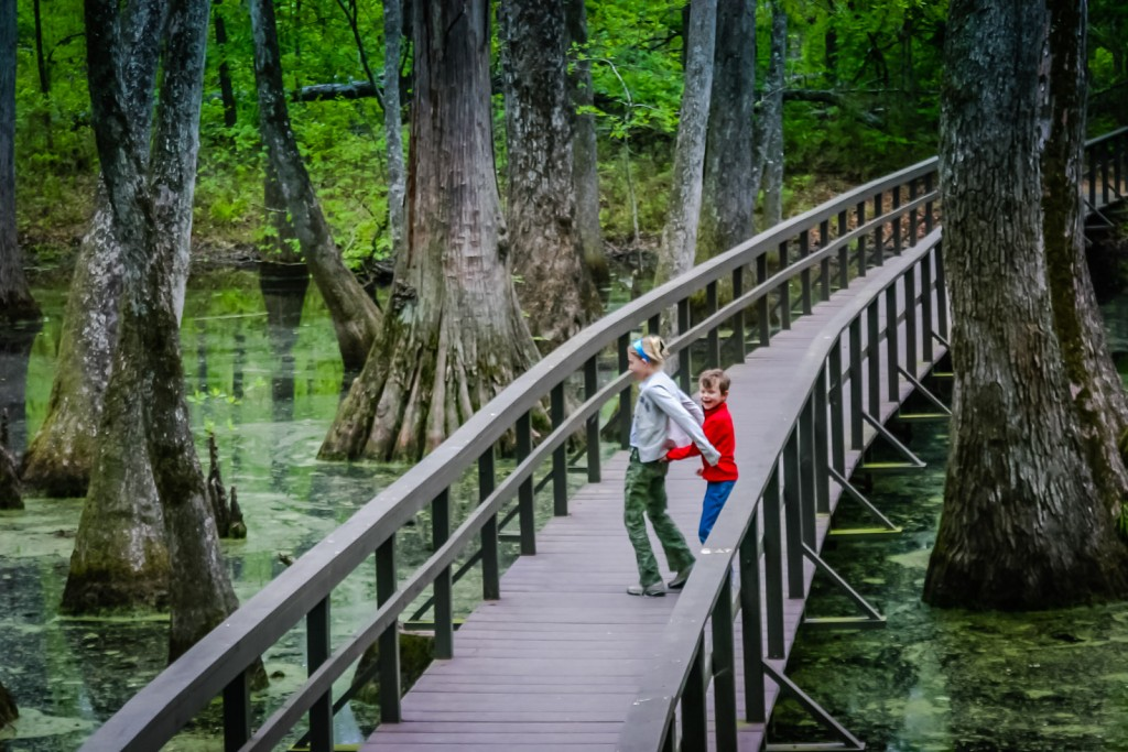 Tupelo-Baldcypress Swamp