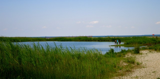 Flag Pond Nature Park, Calvert County MD