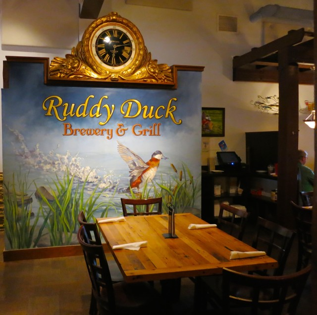 Ruddy Duck, Solomons MD