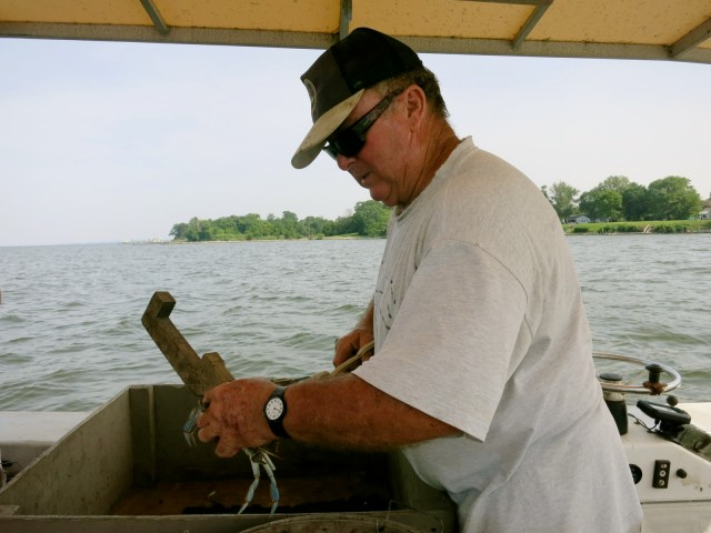 Tommy Zinn measuring crabs