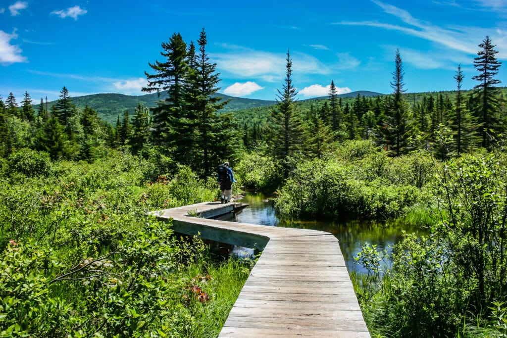 Boardwalk on Twinway Trail in the White Mountains