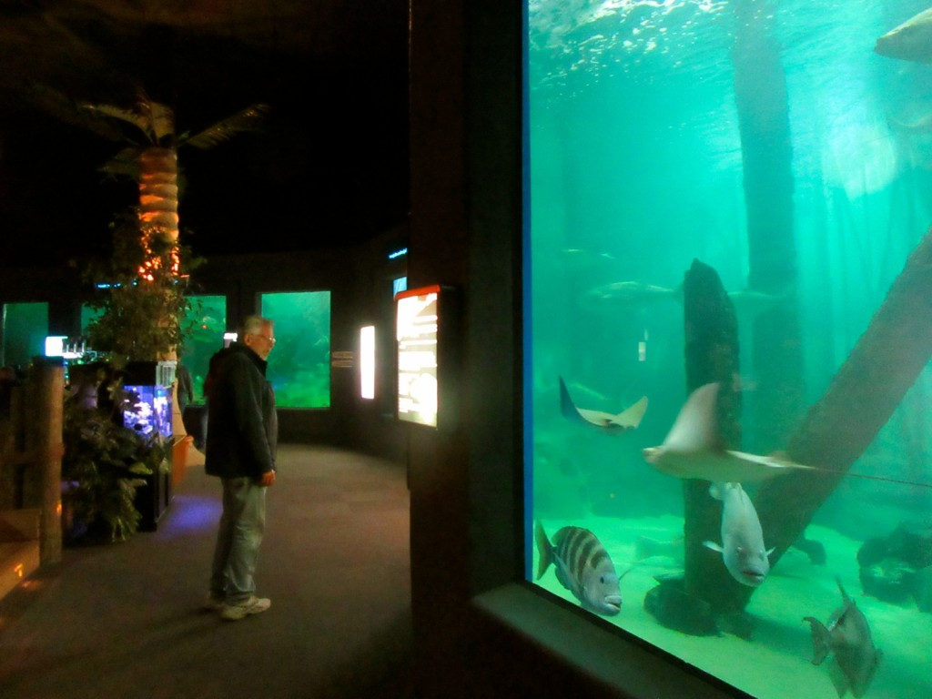 Jenkinsons Aquarium, Point Pleasant NJ