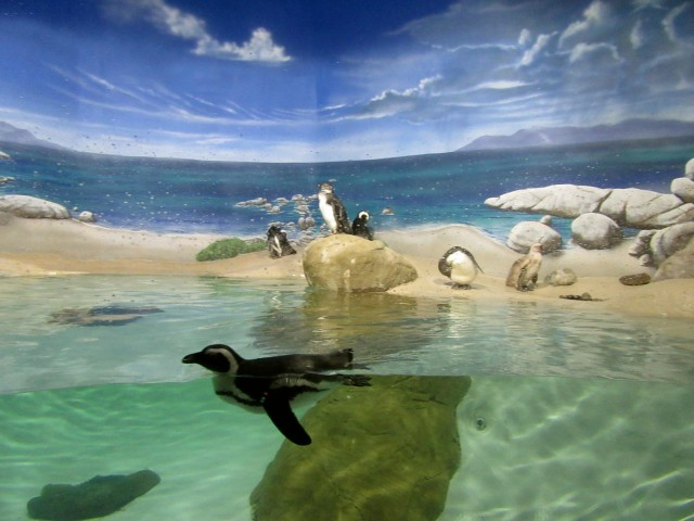 Penguins at Jenkinsons Aquarium, Point Pleasant NJ