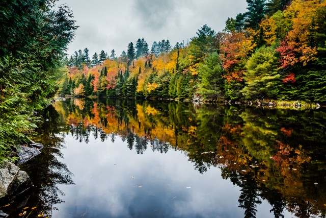 Fall Foliage reflections on a pond in the Adirondack Mountains in Upstate New York.