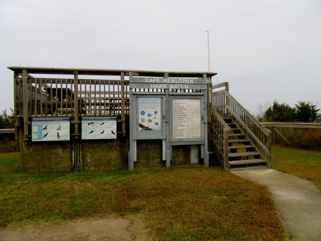 Hawk Watch Platform, Cape Henlopen SP