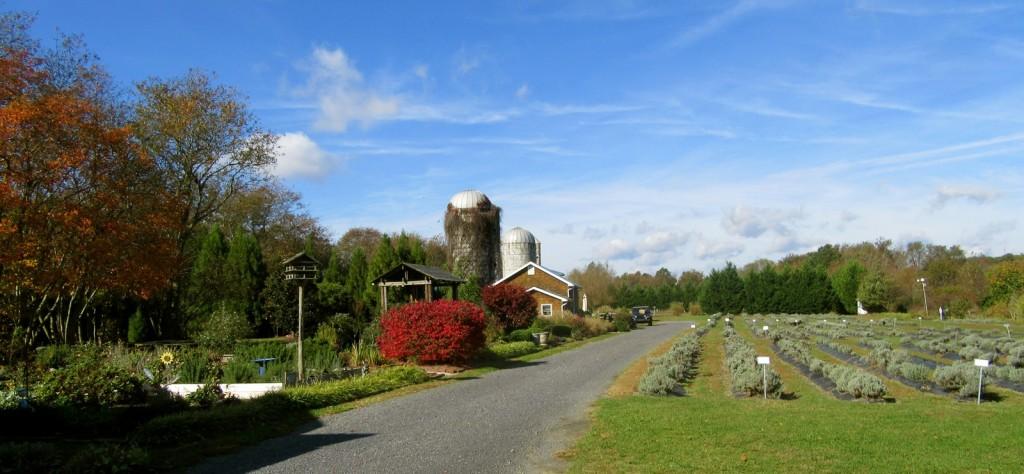 Lavender Fields, Milton DE