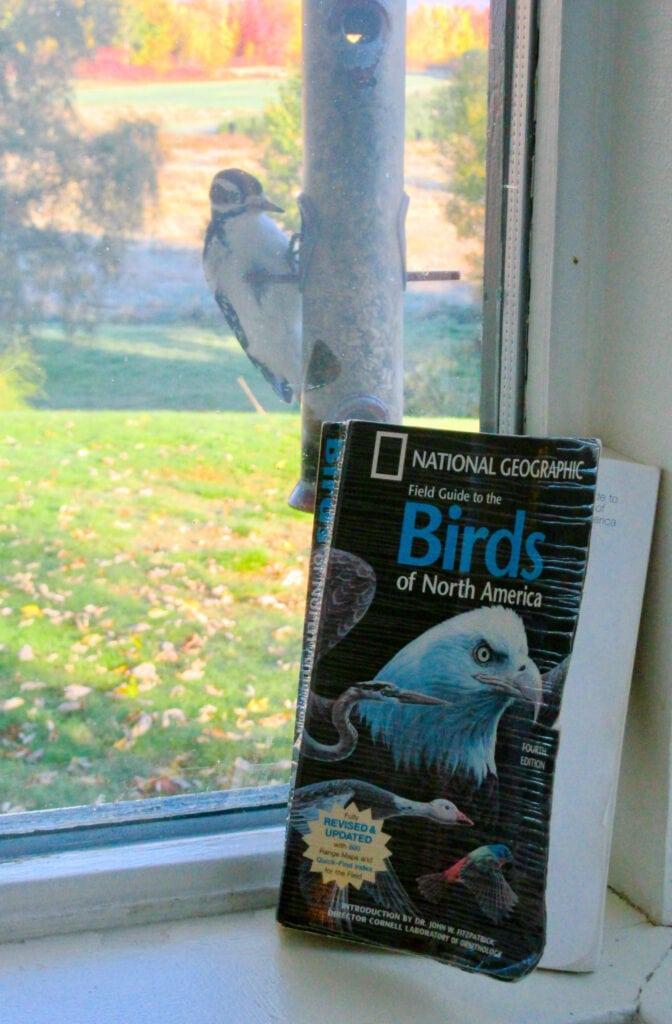 Oxford House Inn Birdwatching