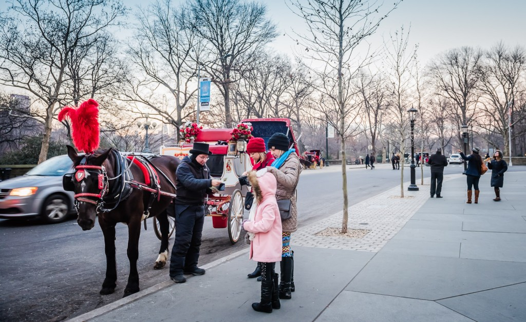 Horse and Buggy Central Park NY