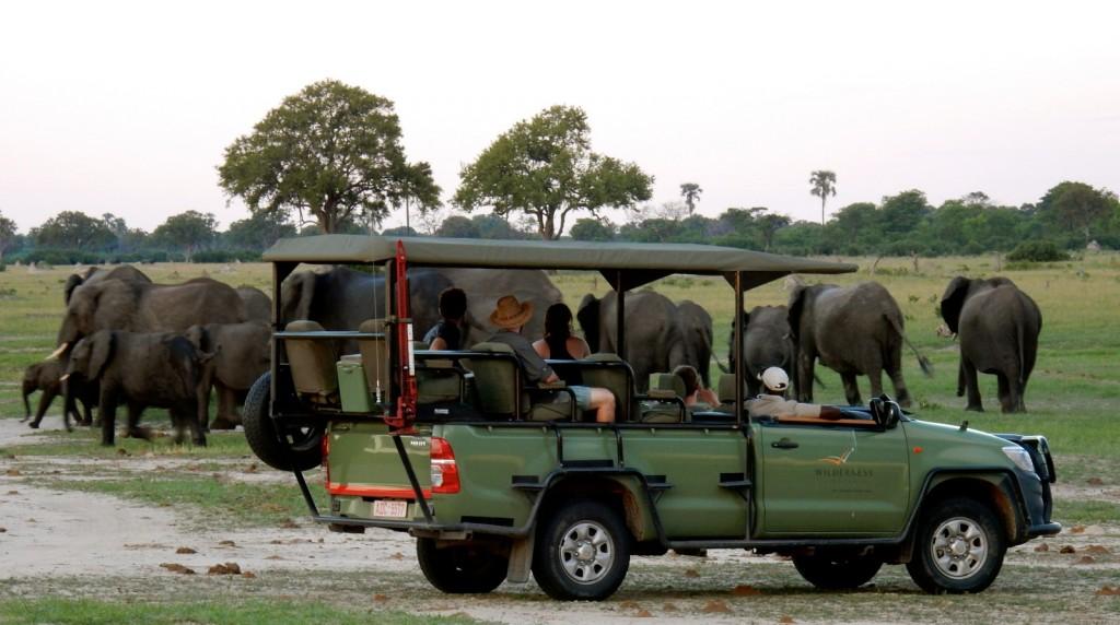 Elephants on afternoon drive