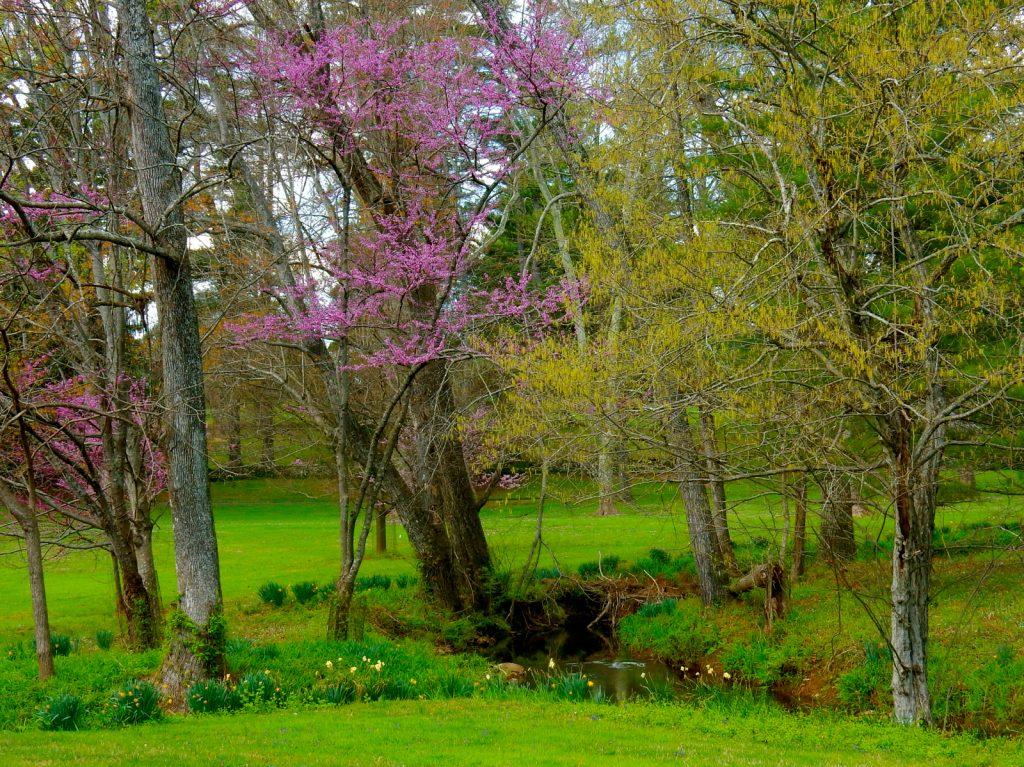 Airlie Resort in Spring Warrenton VA