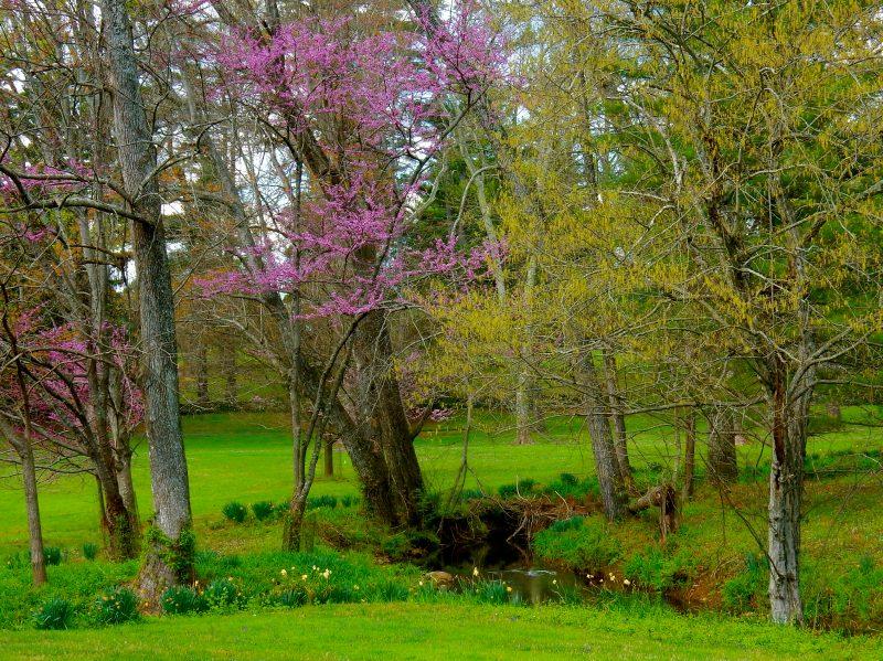 Airlie Landscape, Warrenton VA