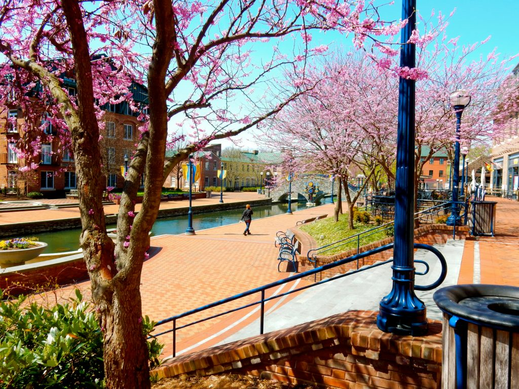 Carroll Creek Park in bloom, Frederick MD