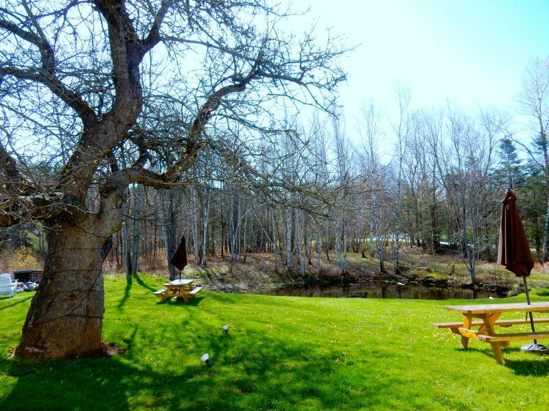 100 Year Old Apple Tree, Red Clover Inn, Mendon VT