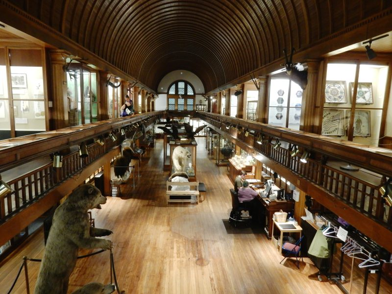 2nd Floor View, Fairbanks Museum of Natural History, St. Johnsbury VT