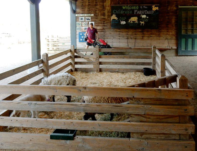 Children's Farmyard, Farm Barn, Shelburne Farms, VT