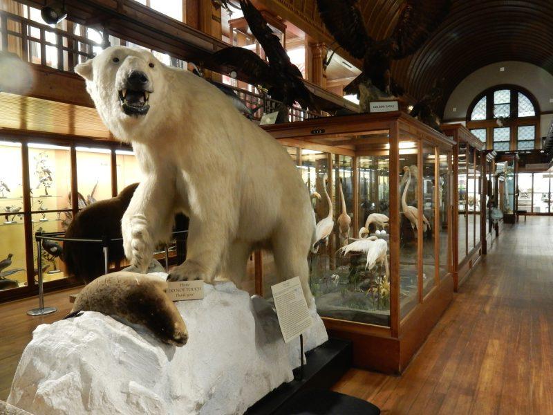 Fairbanks Museum of Natural History, St. Johnsbury VT