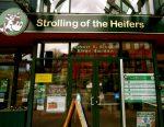 Strolling of the Heiffers, Brattleboro VT