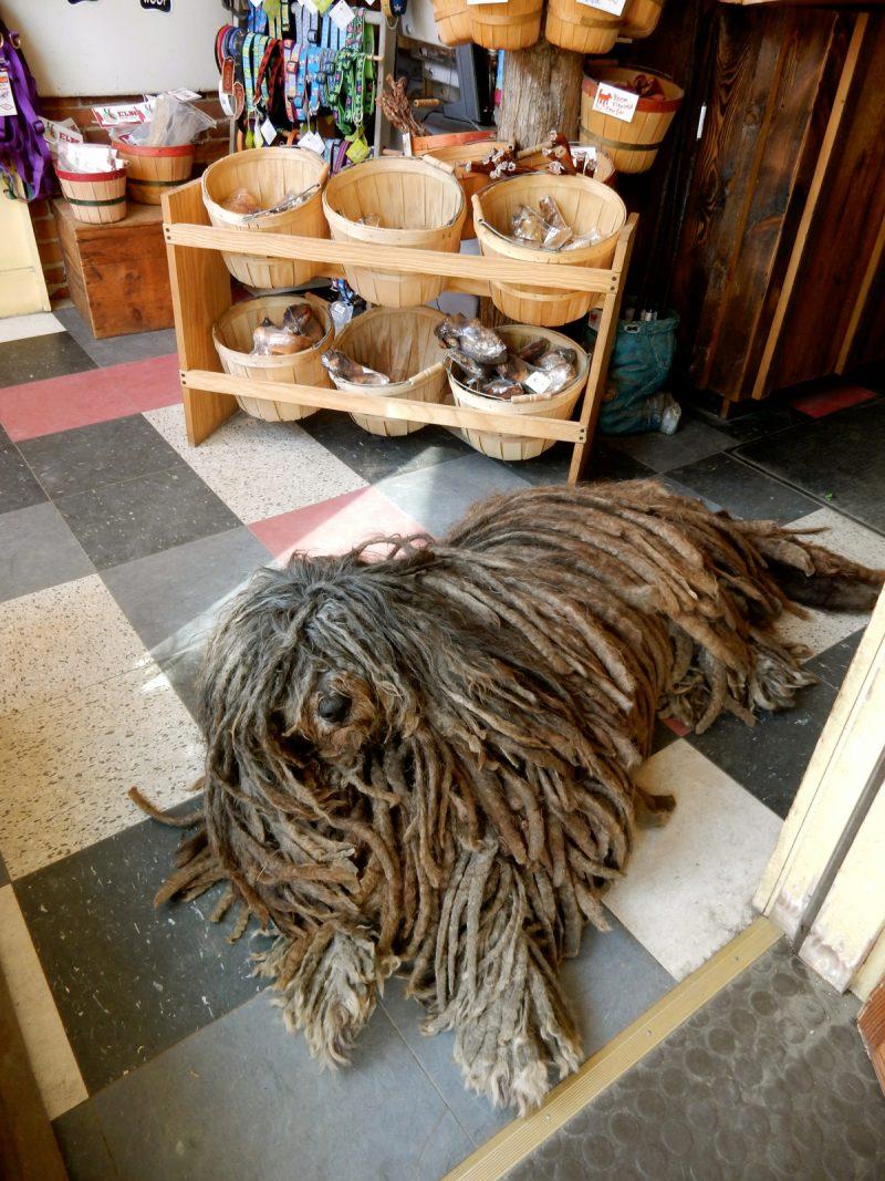 The Quirky Pet, Montpelier VT
