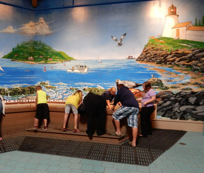 Maine State Aquarium Touch Tank