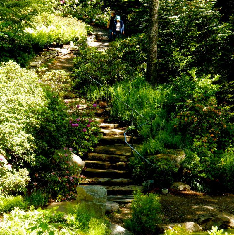 Rhododendrun Garden, Coastal Maine Botanical Gardens