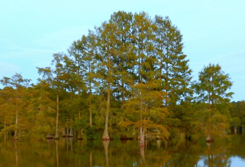 baldcypress-swamp-trap-pond-sp-de