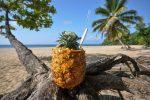Pina Colada on Playa Grande Beach in Cabrera, Dominican Republic.