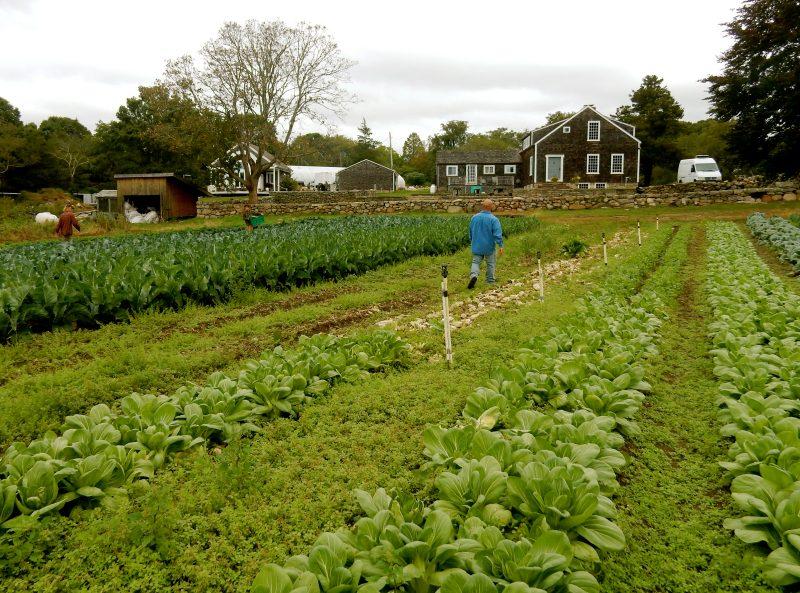 matunuck-oyster-bar-organic-garden-so-kingston-ri